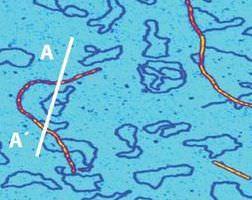 Circular plasmid DNA pUC19 and a filamentous bacteriophage Asylum Cypher AFM